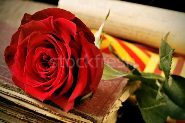 book, red rose and the catalan flag for Sant Jordi, Saint George stock photo (c) nito (#5450816) | Stockfresh