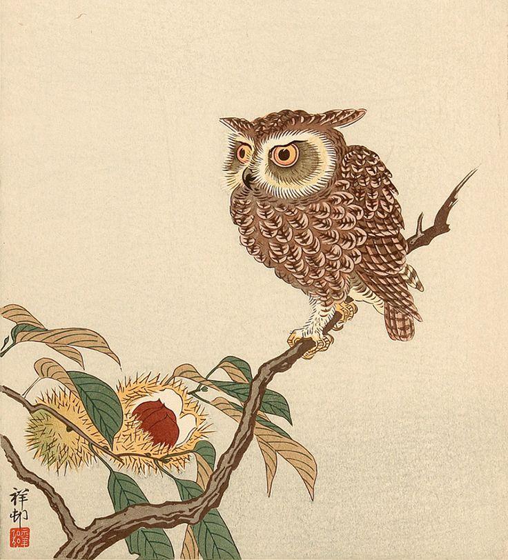 японская сова рисунок одно самых привиденческих