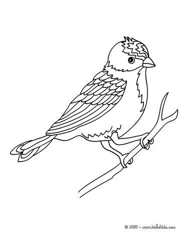 Pájaro que se sienta en una página para colorear rama