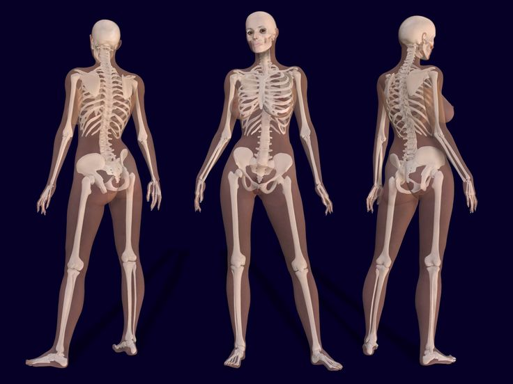 25+ best ideas about human skeleton bones on pinterest | human, Human Body