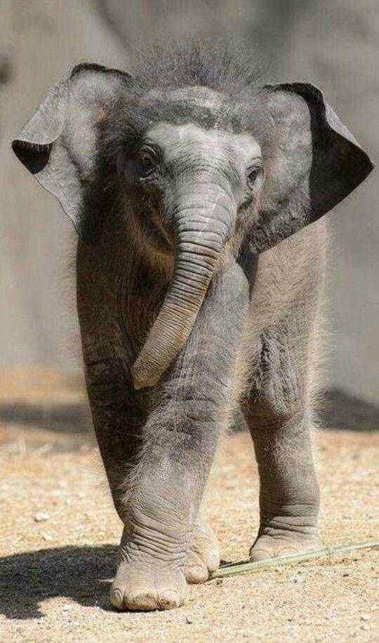 Baby elephant #TimeToLookAtCuteStuff #Local5LetsSeeWhatYouGot