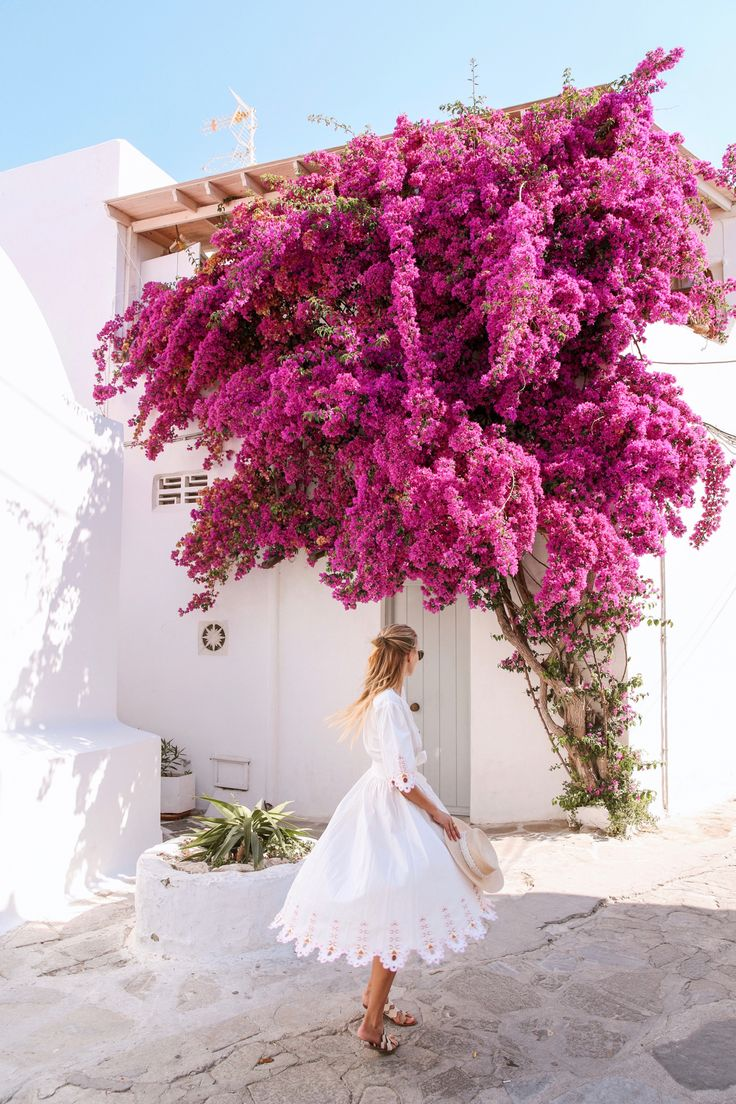 Flowers on Mykonos   Greece http://www.ohhcouture.com/2017/07/monday-update-53/ #leoniehanne #ohhcouture