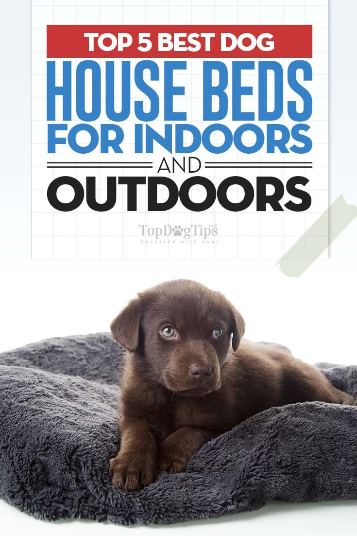 The Five Best Dog House Beds Cool Dog Beds Cool Dog Houses Dog