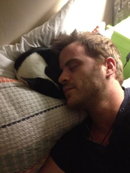 I Re-pin this only because that dog looks suspiciously like a Boston..... Rob Kazinsky and Boston Terrier..... Oh my...