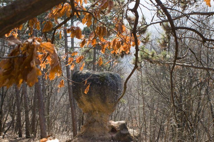 Kő-kövön túra Piliscsabán