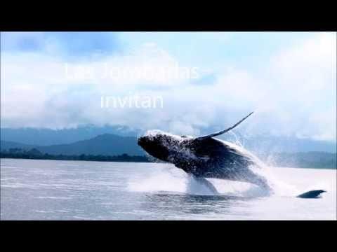 Avistamiento Ballenas en El Chocó