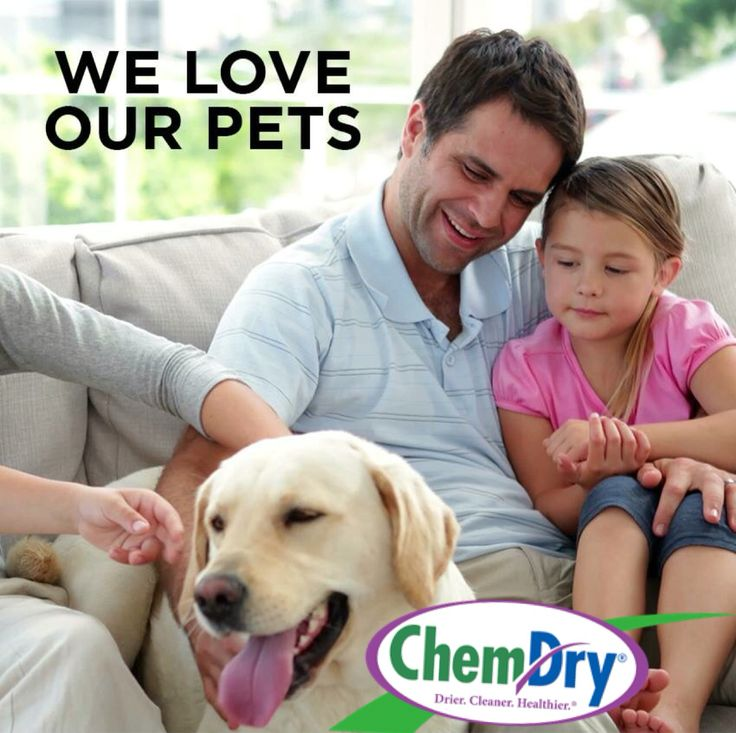 We love our pets at ChemDry. If your pet is an indoor pet our specialised urine and odour removal and cleaning process might be of benefit.  #petodour #peturine