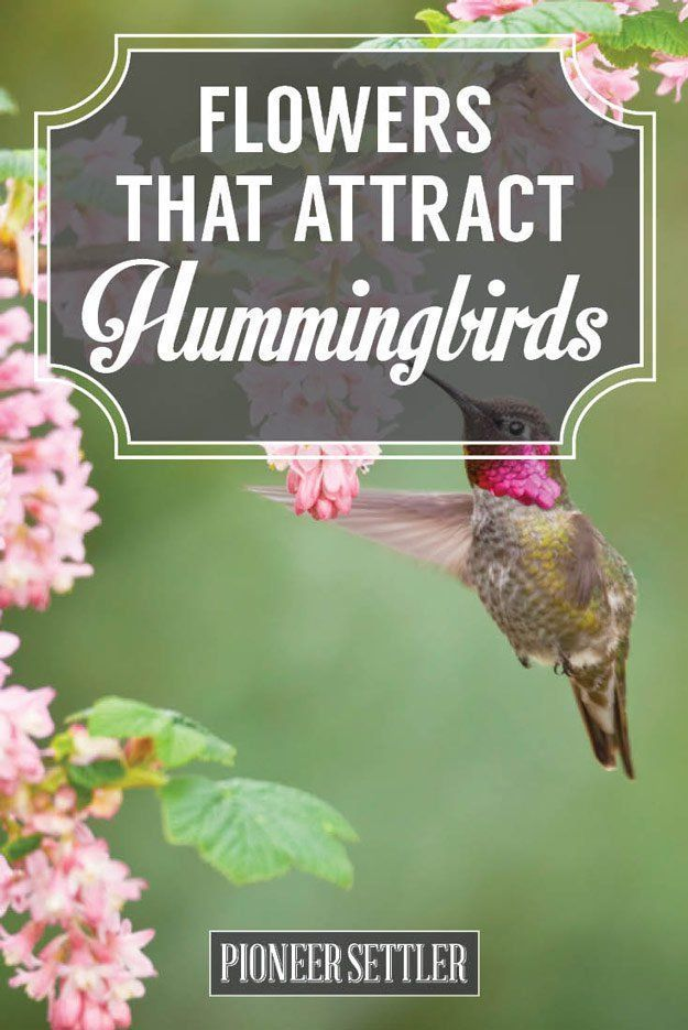 37 Flowers That Attract Hummingbirds