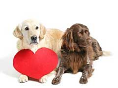 What is a Heart Murmur? Dog heart murmurs are abnormal sounds made by heart valve dysfunction. This dysfunction can be caused by a number of health issues, it can also cause a number of symptoms that can be a serious hindrance to a dog's everyday life, such as dog heart murmur coughing. Here is a