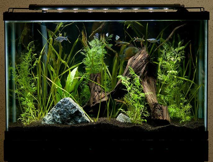 Aquarium lighting can be a tricky business especially if you are creating a planted tank. So, here are 3 of the best aquarium light for beginners