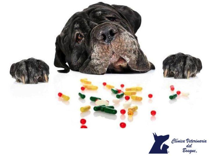 https://flic.kr/p/PorFB8 | ¿Los suplementos con las vitaminas  y minerales son malas para los perros_ CLÍNICA VETERINARIA DEL BOSQUE 3 | ¿Los suplementos con las vitaminas  y minerales son malas para los perros? CLÍNICA VETERINARIA DEL BOSQUE