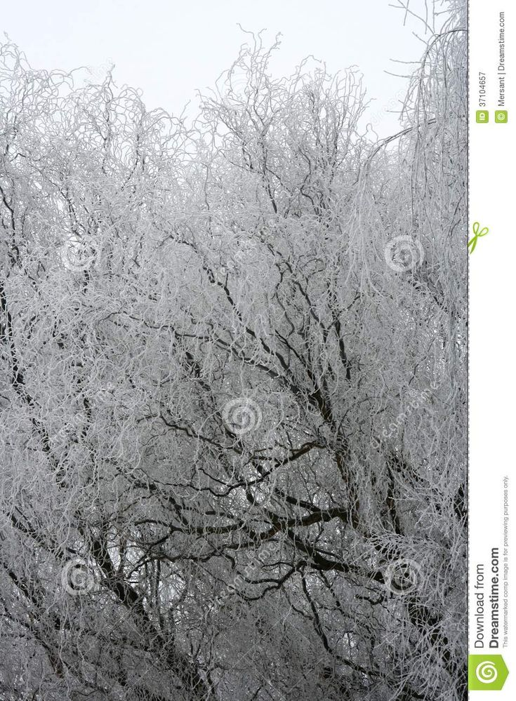 Ice and snow on trees