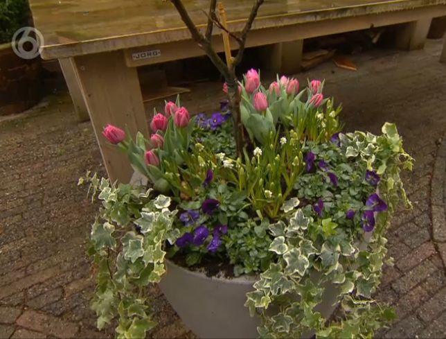 #gardening #tuinieren #potting #dutch #design #modern #natural #capieurope #grey #orange #vase #sbs6 #tv #media #robsgrotetuinverbouwing