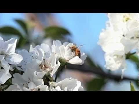 Vanishing of the Bees - Ellen Page