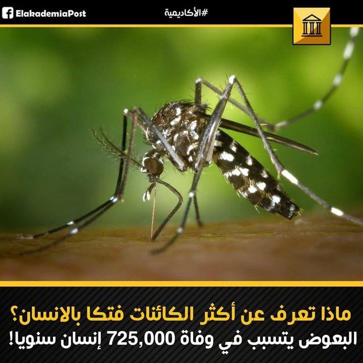 يوجد أكثر من 2500 نوع من البعوض ينتشر في جميع قارات العالم عدا القارة القطيية الجنوبية ويتسبب في 725 ألف حالة وفاة سنويا بين البشر تقريبا يتميز البعوض Animals