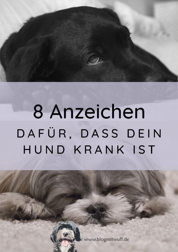 8 Anzeichen Dafur Dass Dein Hund Krank Ist Midoggy Community In 2020 Hunde Krank Anzeichen