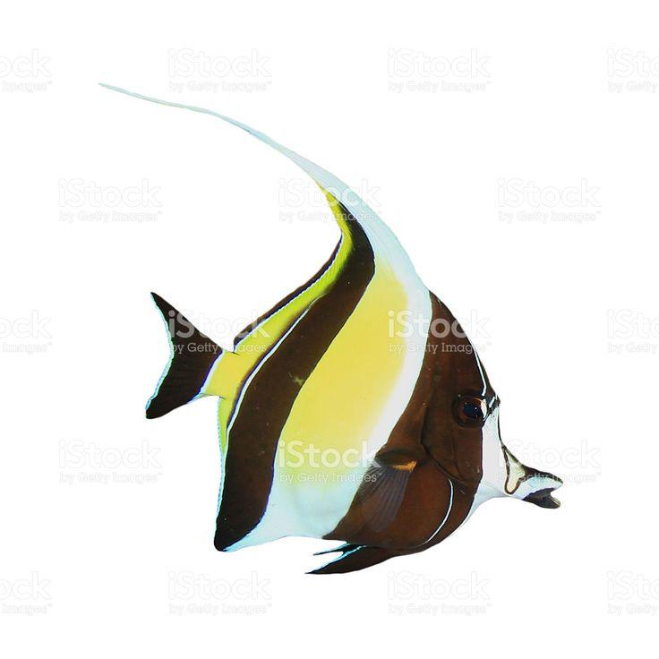 Tropische Fische, isoliert Lizenzfreies stock-foto