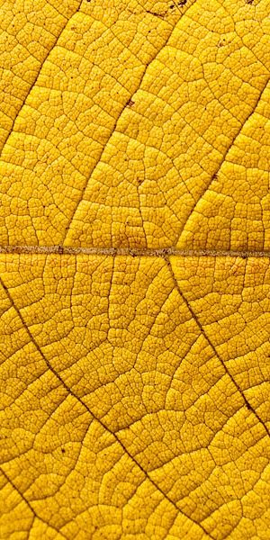 color inspiration | yellow - yellow leaf texture