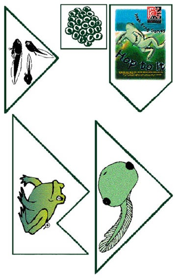 Frog Life Cycle Puzzle