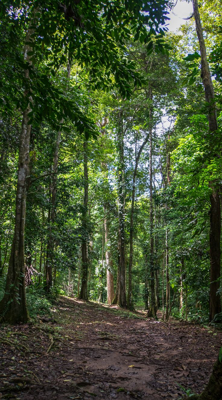 Cahuita is a well-known #beach in #CostaRica, but its #forest might also surprise you.