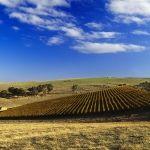 Grosset Gaia Vineyard