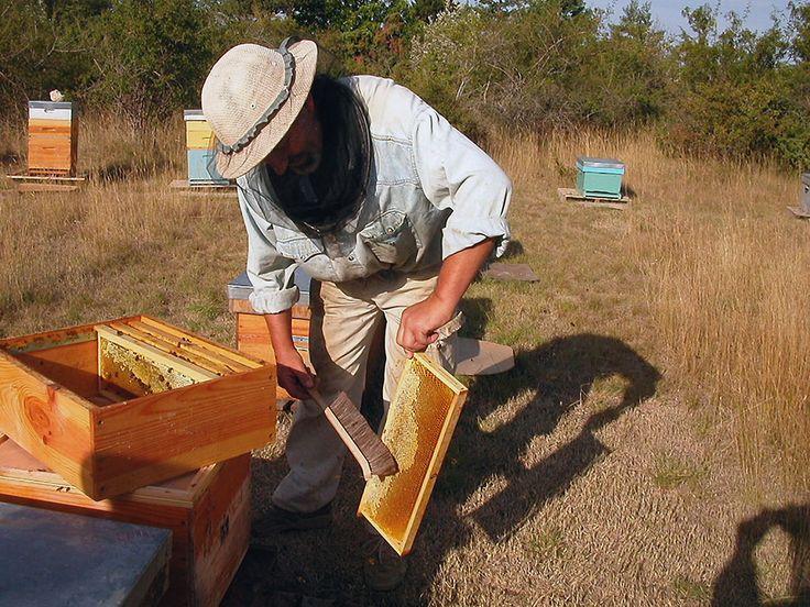 Depuis plusieurs années, le taux de mortalité chez les abeilles est en augmentation extrême. Un phénomène particulièrement inquiétant, notamment lorsque l'on s'intéresse à la grande influence de ces dernières sur l&r...