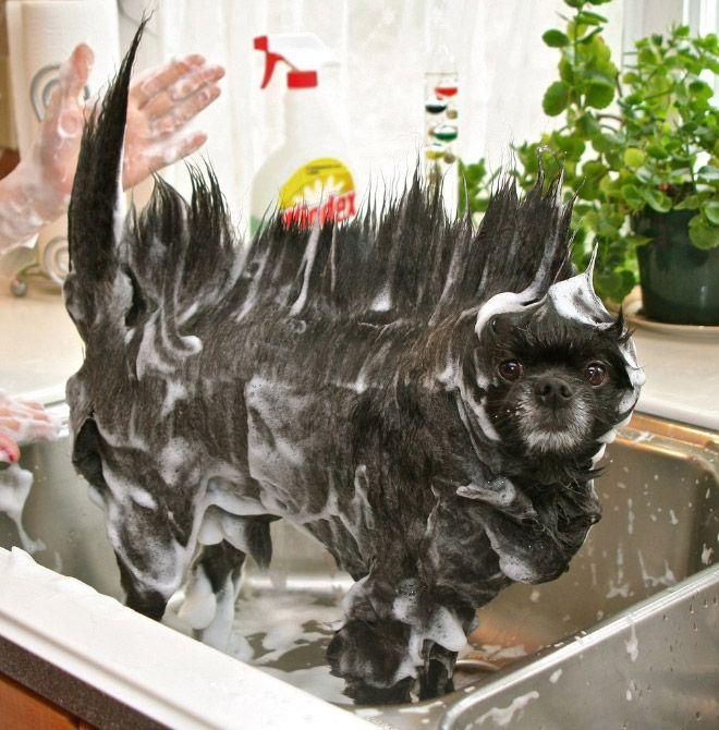 hora do banho (6)