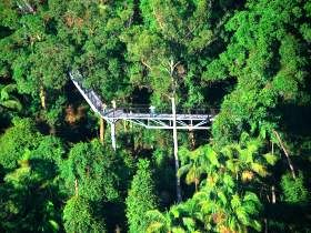 Tamborine Rainforest Skywalk - Gold Coast