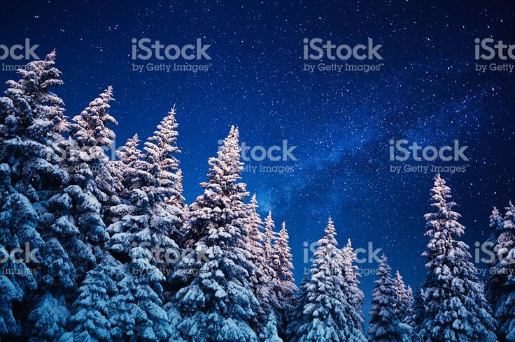 Winter Under The Stars royalty-free stock photo