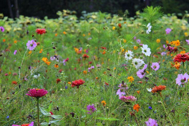 Wilde bloemen voortuin