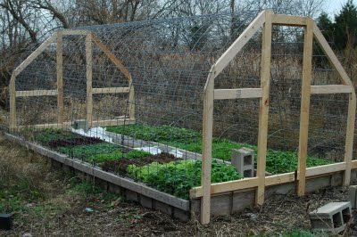 Greenhouse Made Of Cattle Panels And Plastic Sheeting