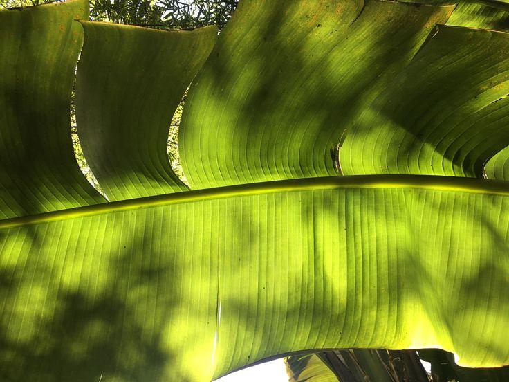 Jardim Botânico RJ 2017