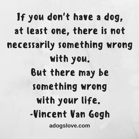 Inspirational And Motivational Quotes :    QUOTATION – Image :    Quotes Of the day  – Description  23 Amazing Quotes for Dog and Animal Lovers  #petloverquotes #dogquotes #doglover #animallover #petquotes  Sharing is Power  – Don't forget to share this quote !    https://hallofquotes.com/2018/03/08/inspirational-and-motivational-quotes-23-amazing-quotes-for-dog-and-animal-lovers-petloverquotes-dogquotes-doglove-18/