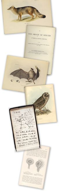 Darwin Online.  Wonderful site that showcases Darwin's life and his printed works.