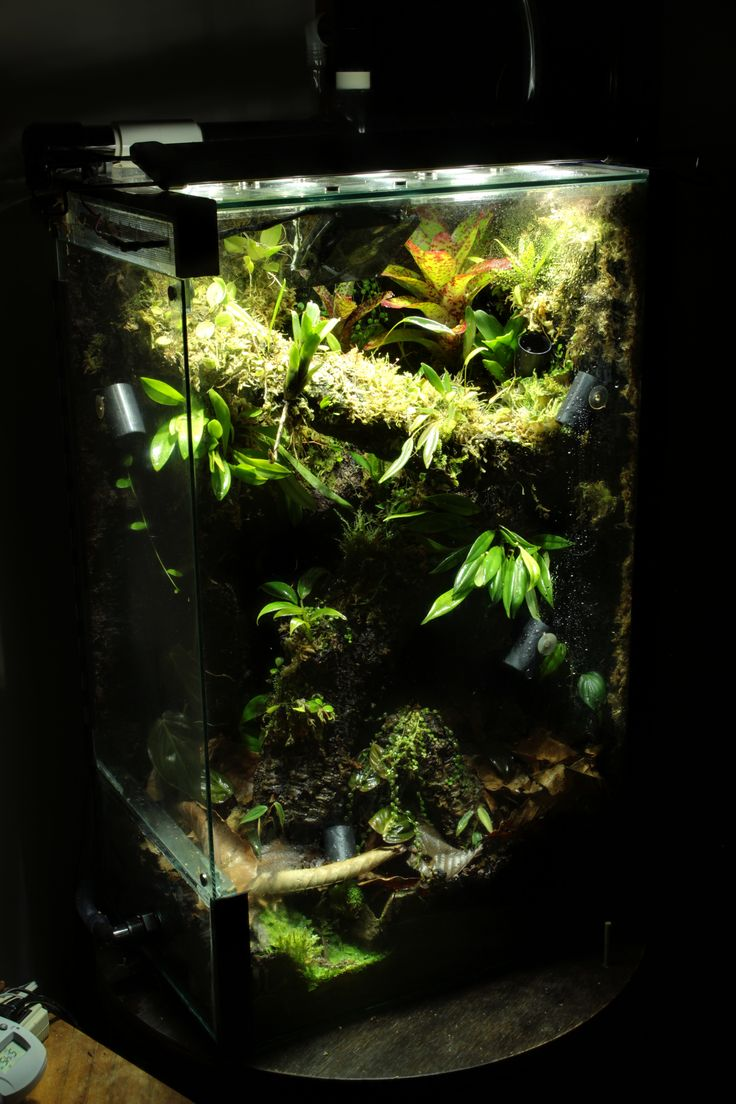 1691 best images about gecko terrarium inspiration on for Vertical fish tank