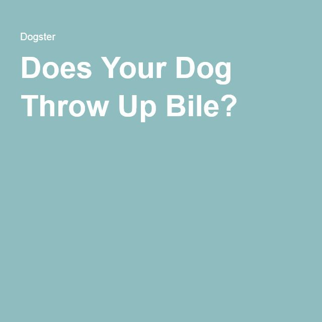 Does Your Dog Throw Up Bile?