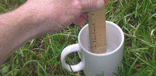 Water usage for lawn during drought