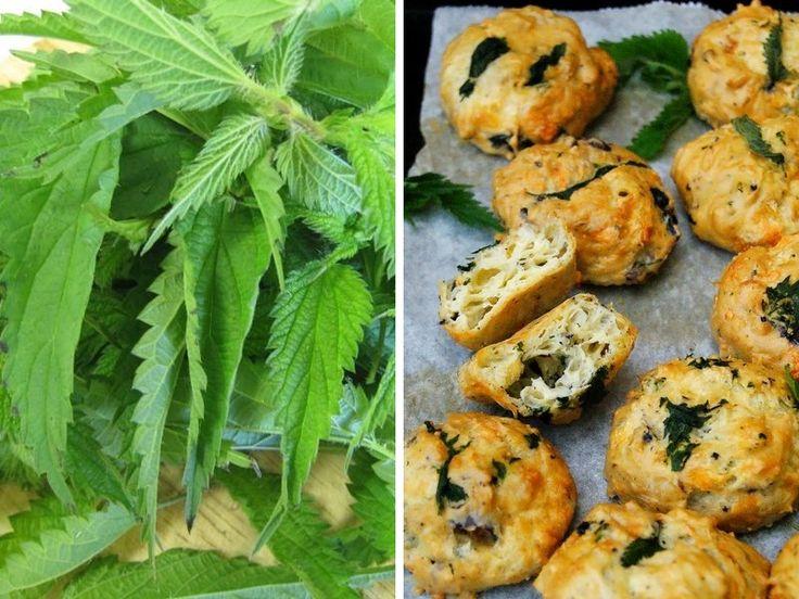 Cuisine : 3 bonnes recettes à base d'orties | Conseils de jardinage pour jardiniers et curieux de nature