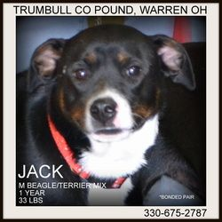 URGENT!!!!! CODE RED...PLEASE SAVE JACK & JILL!!!! (Very sweet pair) ADOPT OR FOSTER TODAY!!!!! PLEASE REPIN!!!!WARREN, OHIO!!!! Jack (bonded with Jill) URGENT!!! is an adopted Beagle Dog in Warren, OH. Jack and Jill are a bonded pair, found abandoned together. �they are both such wonderful dogs....enjoy people, and love each o...