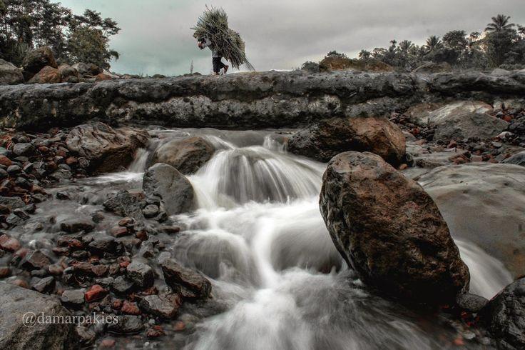 Pencari Rumput | Almari Foto
