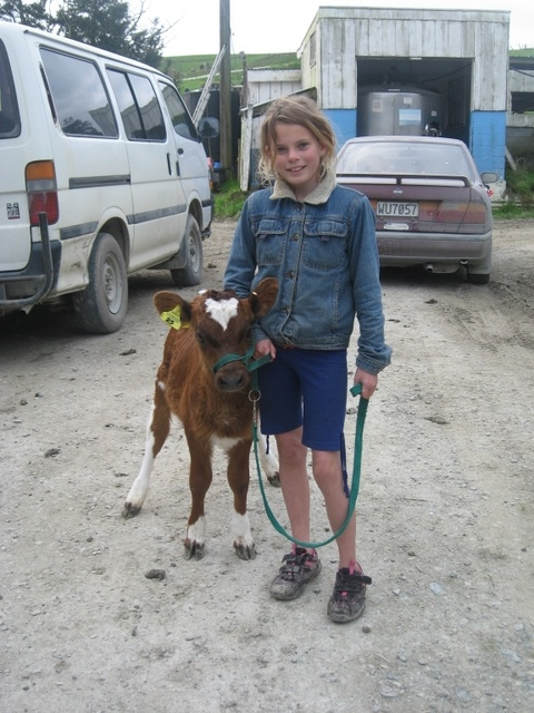 My daughter Inaya with her pet calf Ebony in 2008 at Calf Club practice #Farming #Cattle