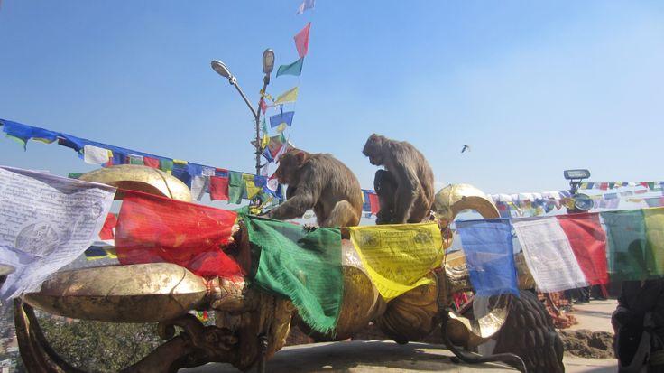 monkeys on the prayer flags, Kathmandú.