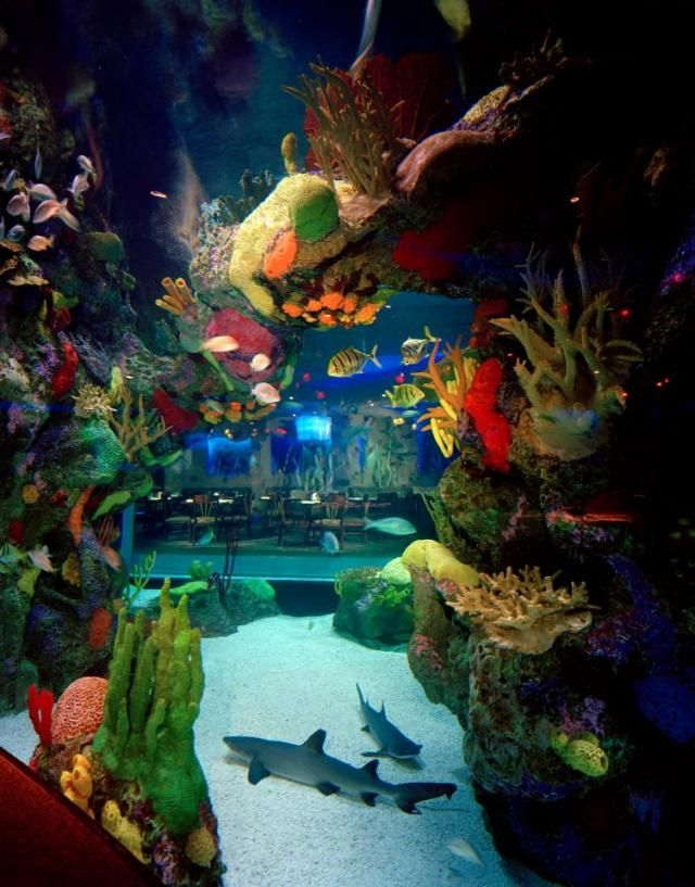 The Aquarium Restaurant in Kemah, Texas.  This restaurant offers many attractions beyond its good food - they feature a 50,000-gallon, floor-to-ceiling aquarium housing more than 100 species of tropical fish and sharks, and Stingray Reef, where you can touch and feed live stingrays.