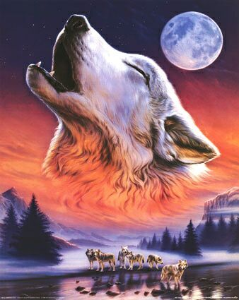 anonymous-howling-wolf-9908373.jpg (338×425)