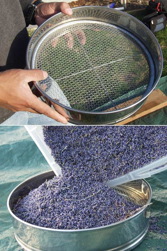 Sachet Sifter - Supplies: Victor's Lavender (Fresh lavender for satchets to put in drawers and closets)