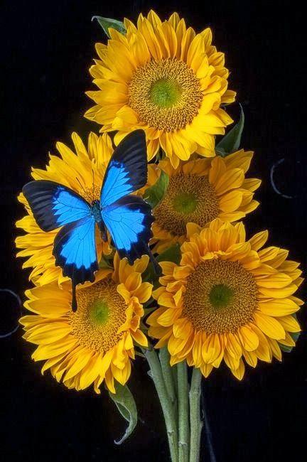 Sunflower Bouquet | A 1 Nice Blog