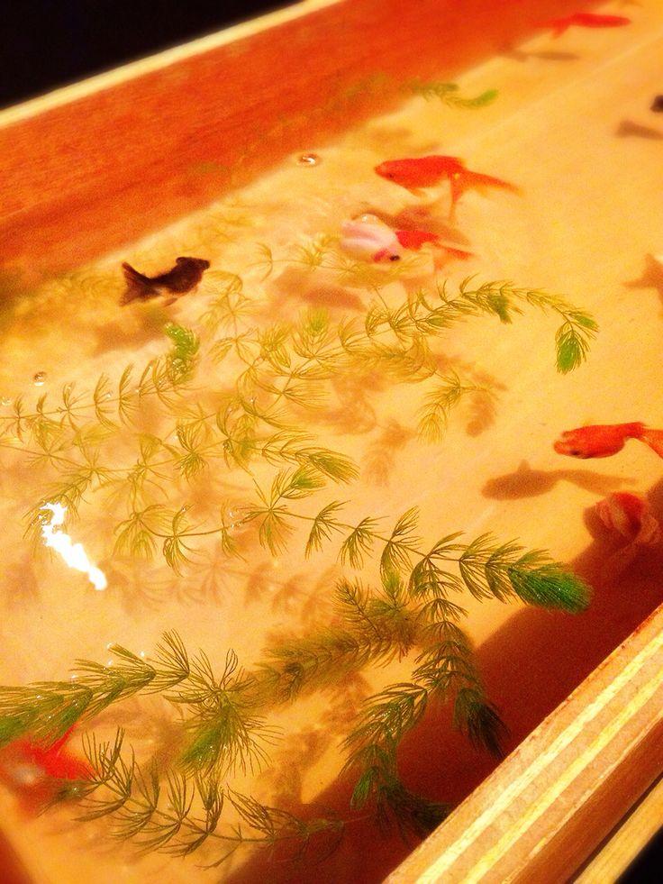 #夏 #金魚 #日本 #日本橋 #JAPAN #SUMMER