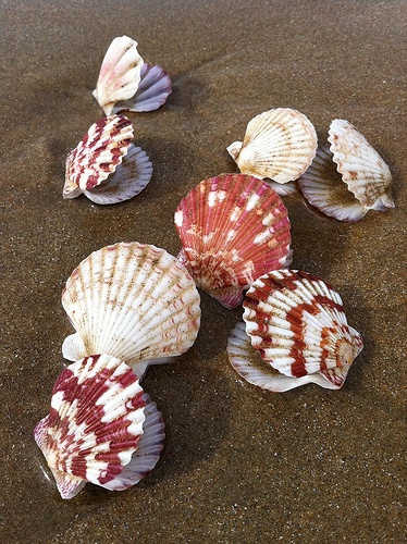 "Ocean sensory bin with sand, shells, ""pearls,"" plastic sea creatures, etc."