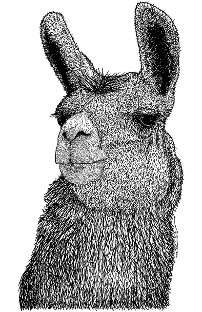 Picture Of A Llama Crying: 78 Best Images About Drawing Ideas On Pinterest