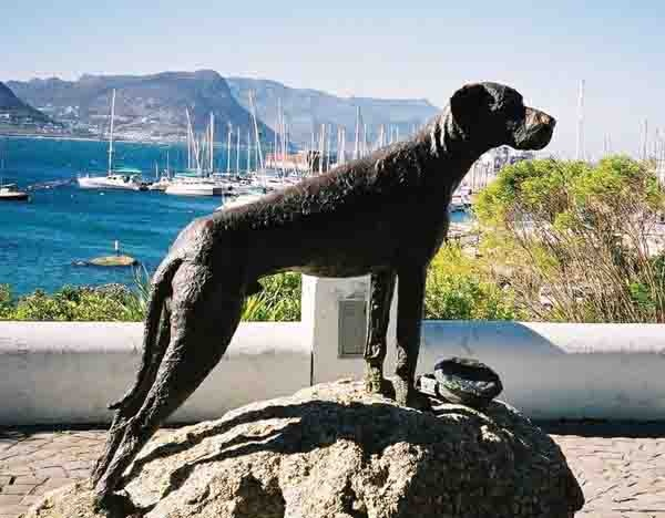 Statue of Just Nuisance, Simon's Town